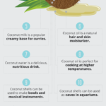 Unique Ways to Incorporate Coconuts into Your Life Infographic