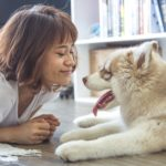 Healthy homes for pet owners