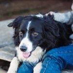 All That You Need To Know About Dealing with Ringworm in Pets