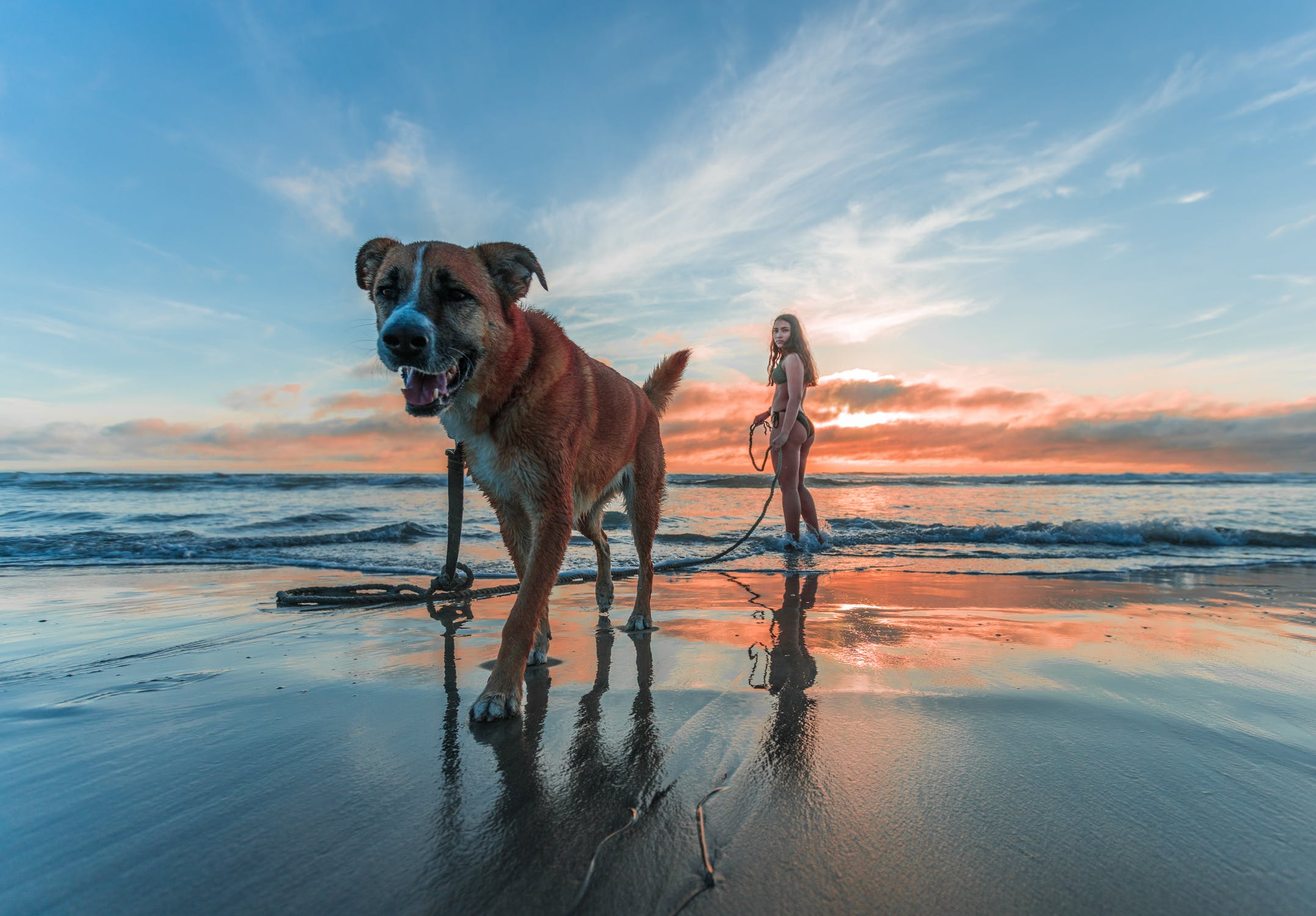 Stem Cell Therapy for Cats and Dogs
