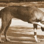 Reasons Why Your Dog Is Itching So Much