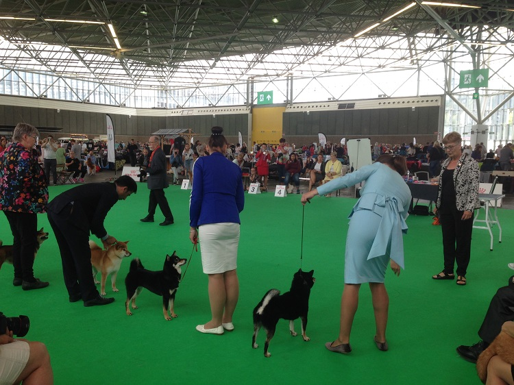 Beginning Tips for Getting Into the Dog Show Scene